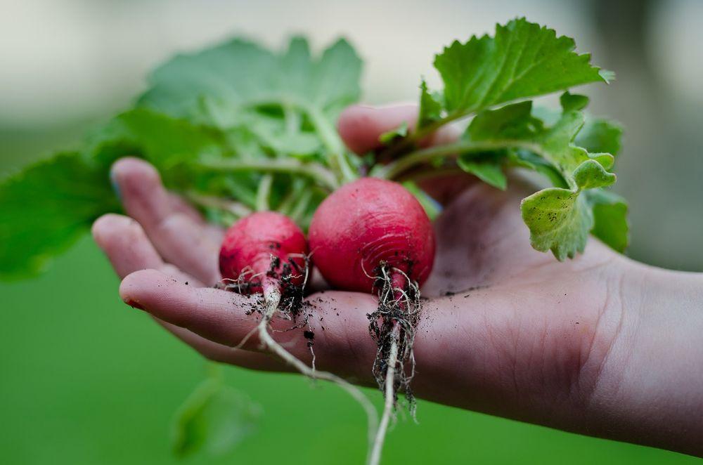 Kwiecień w ogrodzie: niezbędne prace - część 2