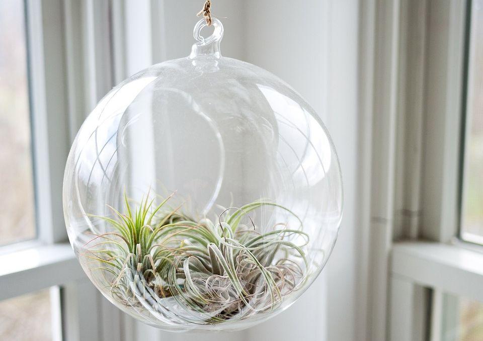 szklana kula z roślinami