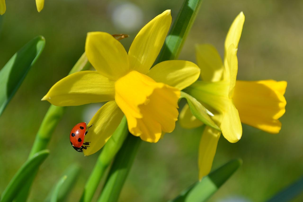 kwiecień w ogrodzie