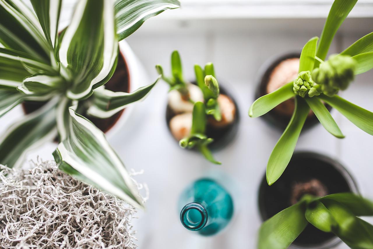 zdalne podlewanie roślin