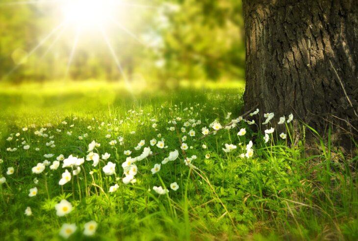drzewa do ogrodu